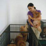 Gửi chó ngày Tết gần 1 triệu đồng/ngày