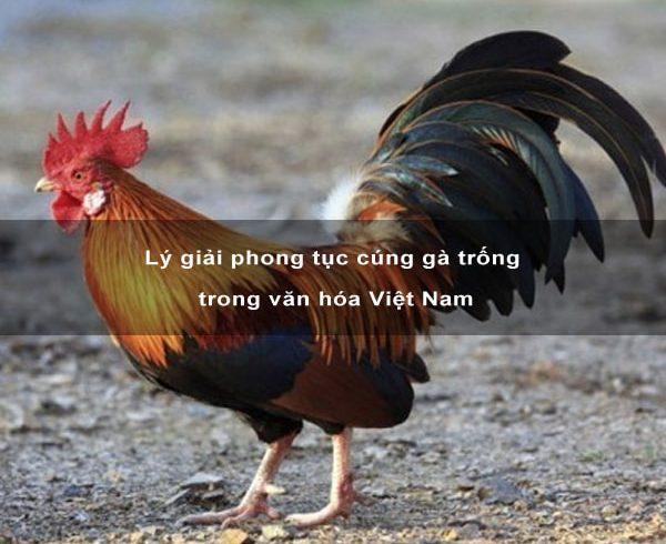 Lý giải phong tục cúng gà trống trong văn hóa Việt Nam 1